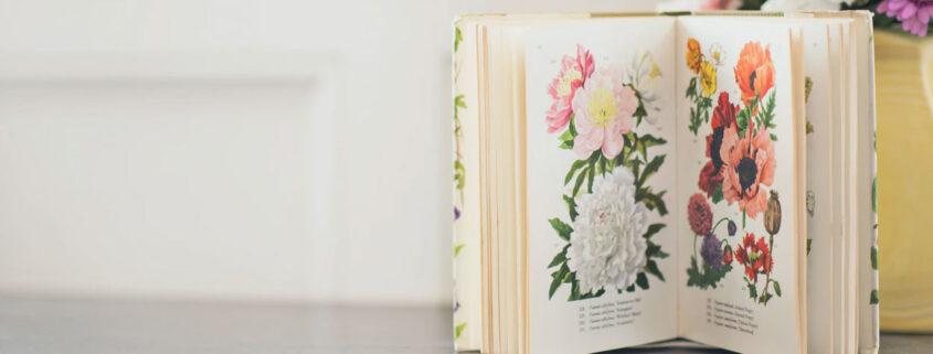 Diferencias entre libro ilustrado, álbum ilustrado y libro álbum